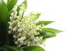 Fototapeta Na białym tle - Dzień matki - Kwiat