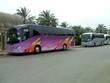 buses in parking area/parking lot.transportation