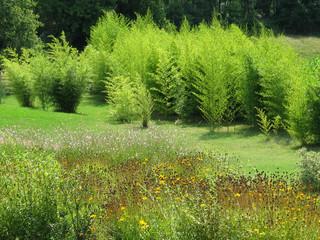 paysage verdoyant