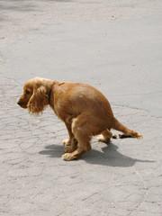 dog distributor