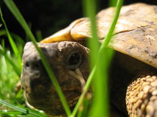 l'oeil de la tortue