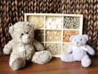 teddy-bears & seashells