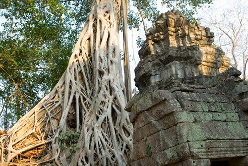 roots at ta prohm