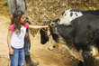 child with oxen