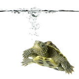 Fototapete Ruhestopfen - Turbulenz - Reptilien / Amphibien
