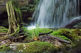 tree stump and waterfall - 3324907