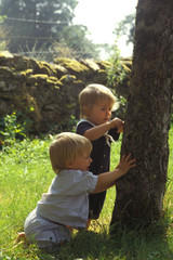 enfants arbre