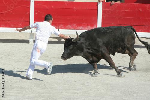 Canvas Stierenvechten raseteur en action