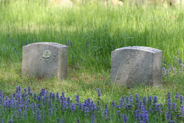 blue flowers and tomb stones