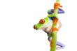 frog climbing