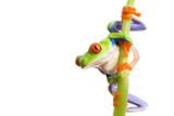 Fototapety frog climbing