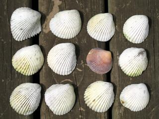 twelve shells
