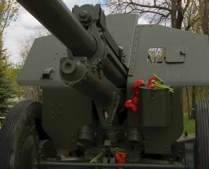 tulip on cannon
