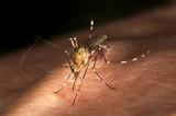 no me moleste mosquito poster