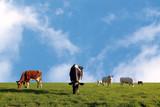 grazing herd of cows poster