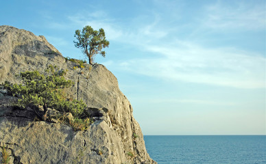 lonely viable tree