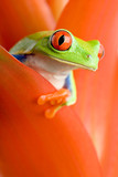 Fototapety frog in a plant
