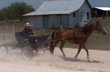 mennonites of belize.