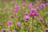 pink wildflowers poster