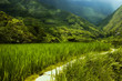 hapao rice terraces, philippines