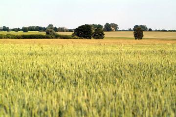 wide agricultural landscape