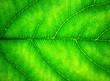 canvas print picture - grüne adern 2