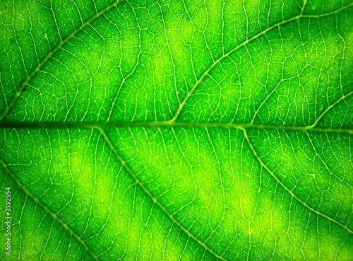 canvas print picture grüne adern 2
