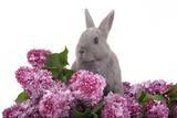 bunny among the purple lilac poster