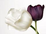 Fototapete Geschenk - Liebe - Blume