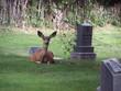 deer by tombstones