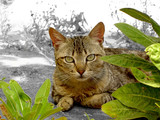 gato por detrás das folhas poster