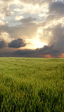 wheat field during stormy day poster