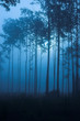 dark moody fog filled forest