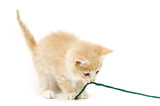 yellow kitten pulling on yarn on white  background poster
