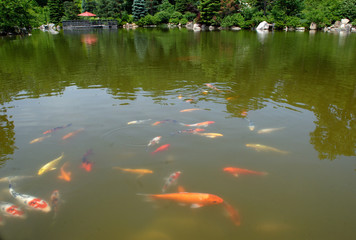 japanesegarden pond