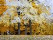 Leinwanddruck Bild creve couer park