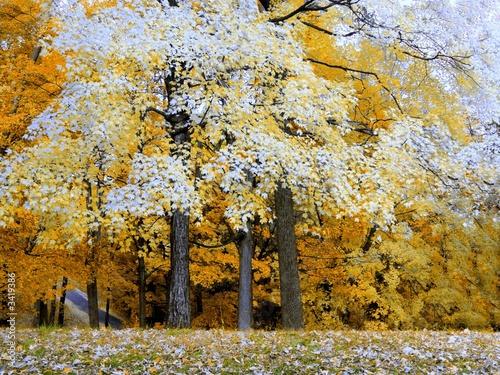 canvas print picture creve couer park