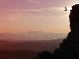 tramonto con aironi poster