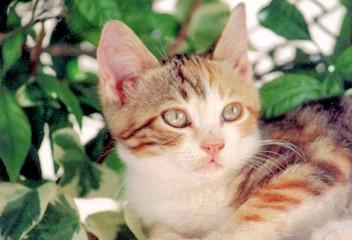 multicoloured kitten