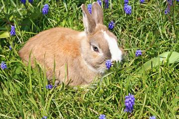 Blond bunny