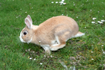 runing rabbit