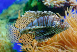 exotic fish in aquarium poster