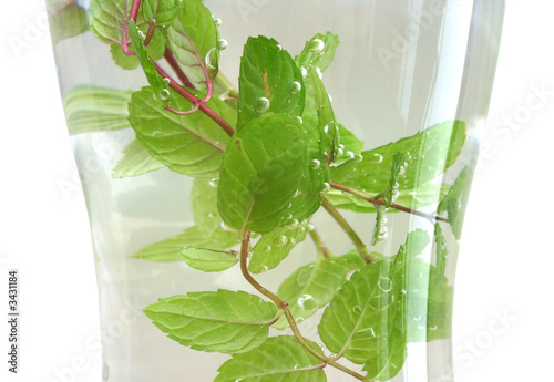mint leaves in a glass of water