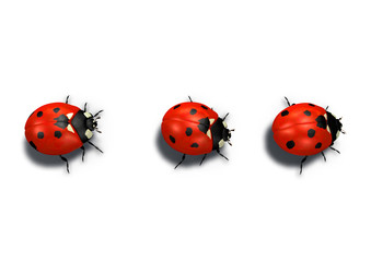 three red ladybugs in line