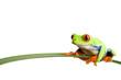 Leinwanddruck Bild - frog on a leaf