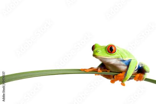 Leinwanddruck Bild frog on a leaf