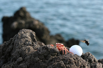 hawaii golfers