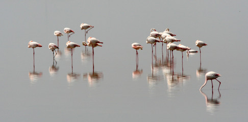groupe de flamants roses au repos
