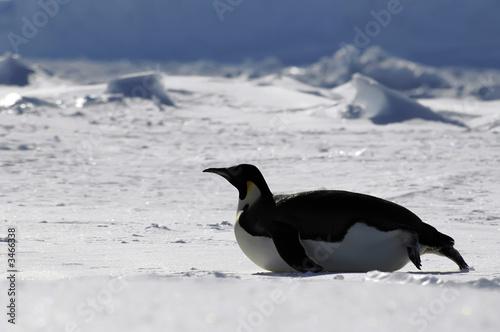gliding penguin - 3466338