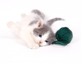 gray and white kitten playing with yarn poster